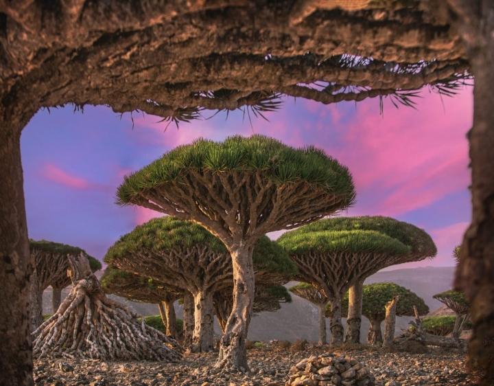 Du hí hòn đảo kỳ lạ nhất hành tinh, mỗi bước chân như lạc vào thế giới khác - 4
