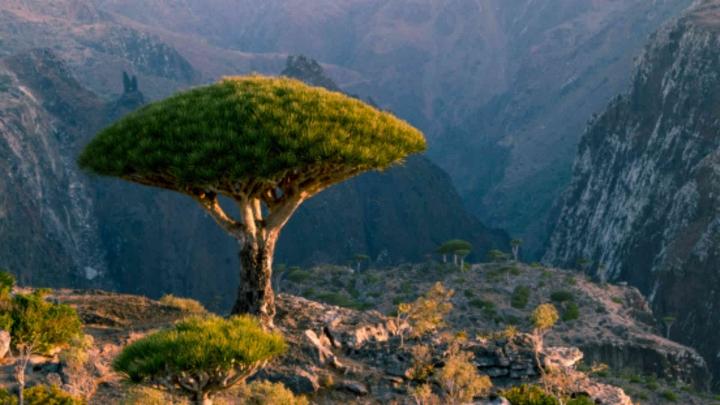 Du hí hòn đảo kỳ lạ nhất hành tinh, mỗi bước chân như lạc vào thế giới khác - 2