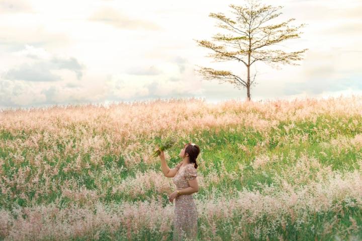 Đồi cỏ hồng đẹp mơ màng nằm giữa núi rừng Gia Lai hút hồn du khách - 5