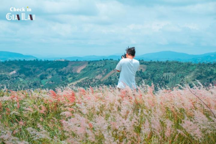 Đồi cỏ hồng đẹp mơ màng nằm giữa núi rừng Gia Lai hút hồn du khách - 2
