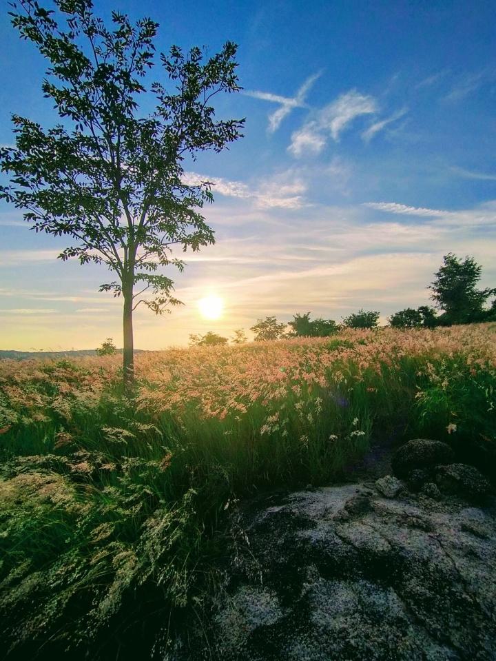 Đồi cỏ hồng đẹp mơ màng nằm giữa núi rừng Gia Lai hút hồn du khách - 3