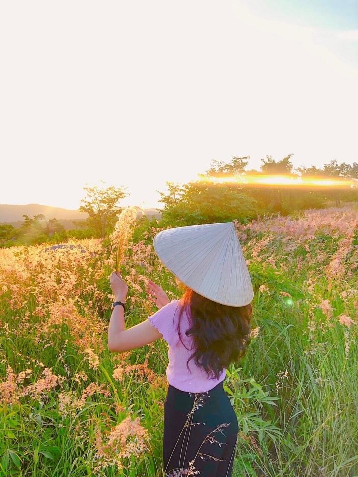 Đồi cỏ hồng đẹp mơ màng nằm giữa núi rừng Gia Lai hút hồn du khách - 8