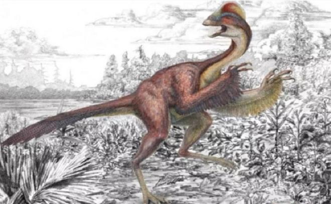 Kỳ dị hóa thạch 'gà địa ngục' cao 1,5 m - 1