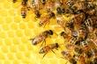 Con trai và đàn ong có gì khác nhau?