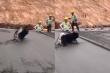 Thợ xây bất lực nhìn chú chó đi dạo trên nền bê tông mới đổ