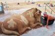 Khó tin những con vật khổng lồ sống động này lại chỉ là... cát