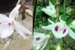 Cận cảnh giỏ hoa lan đột biến có giá hơn 1 tỷ đồng ở Huế