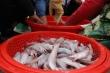 Được mùa cá khoai, ngư dân Hà Tĩnh bám biển kiếm tiền triệu mỗi ngày