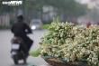 Hoa bưởi cuối mùa giá rẻ níu chân khách Hà Nội