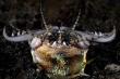 Video: Xem sâu biển tử thần, 'cỗ máy xay thịt' kinh khủng nhất hành tinh há mồm đớp gọi con mồi