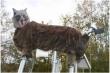 Chạm mặt 'robot sói quái vật', gấu rừng thục mạng bỏ chạy
