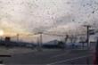 Dân mạng Hàn Quốc xôn xao trước hình ảnh đàn quạ đen bay kín trời