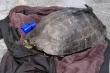 Người đàn ông câu trộm rùa ở hồ Hoàn Kiếm