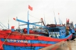 Quảng Ngãi cần 400 tỷ để 'giải bài toán' tàu cá thiếu chỗ neo đậu trú bão