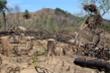 Khởi tố hai cha con phá 11.300m2 rừng tự nhiên ở Bình Định