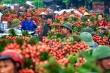 190 thương nhân Trung Quốc được phép vào thu mua vải thiều