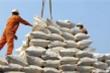 9 giống gạo thơm Việt Nam được hưởng hạn ngạch thuế quan khi xuất sang châu Âu