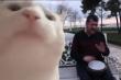 Mèo gõ mặt vào màn hình điện thoại theo nhạc