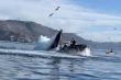 Cá voi lưng gù suýt nuốt chửng 2 tay chèo kayak