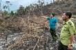 Truy tìm kẻ phá hơn 3,5 ha rừng tại Đắk Lắk