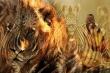 Trắc nghiệm vui đoán tính cách: Bạn nhìn thấy ngựa vằn hay sư tử?