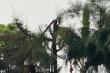 Học sinh bị điện giật chết khi cắt tỉa cây: Kiến nghị kỷ luật lãnh đạo trường