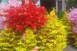 Ảnh: Phố hoa giả Sài Gòn rực rỡ ngày giáp Tết