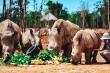 Tê giác nhí 'quốc tịch Việt' ở Vinpearl Safari