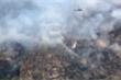 Australia cứu thành công 'thông khủng long' quý hiếm khỏi thảm kịch cháy rừng