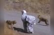 Clip: Đóng giả ngựa vằn, 2 thanh niên bị sư tử vồ