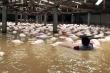 Mưa lũ hoành hành, bão số 11 sắp đổ bộ: Làm sao để không dính bệnh truyền nhiễm chết người