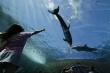 Kinh ngạc robot cá heo bơi như động vật sống