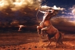 Tử vi ngày 17/8 của 12 cung hoàng đạo: Nhân Mã gặp rắc rối trong công việc
