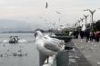 Kỳ lạ hồ nước trên núi cao có cả triệu con chim hải âu bay rợp trời