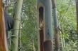 Video: Vào rừng bắt sâu tre kiếm tiền triệu mỗi ngày tại Lào Cai