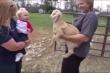 Clip: Em bé nói chuyện với dê con bằng tiếng của loài dê