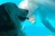 Video: Đi chơi thuỷ cung, chú chó được cá heo 'bắt chuyện' làm quen