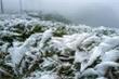 Tết Dương lịch, vùng núi cao có thể xuất hiện băng giá