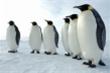 Các nhà khoa học bị 'say' vì phân của chim cánh cụt ở Nam Cực