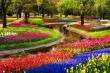 Lạc vào công viên hoa Tulip rực rỡ sắc màu ở Ecopark