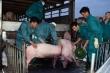 Thái Lan giảm xuất khẩu thịt lợn sang Việt Nam