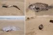 Cá chết hàng loạt ở biển Nghệ An nhưng sau 3 ngày mới lấy mẫu nước phân tích