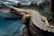 Quái vật thời tiền sử: Siêu cá sấu có thể 'làm thịt' cả khủng long