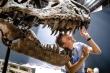 Dấu tích cuối cùng của loài khủng long