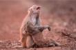 Sự thật phía sau bức ảnh khỉ mẹ ôm xác con gào thét khiến ai nấy rơi lệ