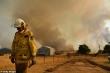 Australia sắp đón đợt mưa quý hơn vàng hạ nhiệt cháy rừng nhưng tiềm ẩn nguy hiểm mới