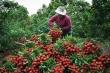 Bắc Giang: Hàng trăm ngàn tấn nông sản, hàng chục triệu gia súc gia cầm bị 'tắc'