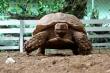 Video: Đàn rùa cạn khổng lồ, tuổi thọ hơn 100 năm ở Hà Nội