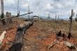 Hình ảnh những cánh rừng ở Đắk Nông bị 'cạo trọc' nhìn từ flycam