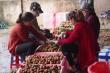 200 thương lái Trung Quốc sắp đến Bắc Giang lùng mua vải thiều
